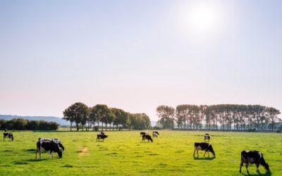 Saarlased loodavad hakata veiseliha Hongkongi eksportima